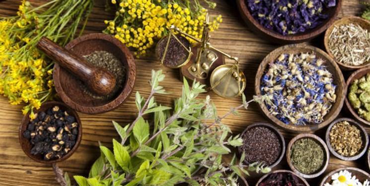 عصاره های گیاهی موثر برای درمان دیابت معرفی گشت